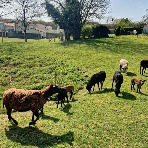 06a - Les Logis La Fontaine - Espace Vert - Les Moutons